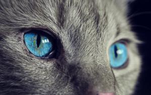 Jak dbać o oczy